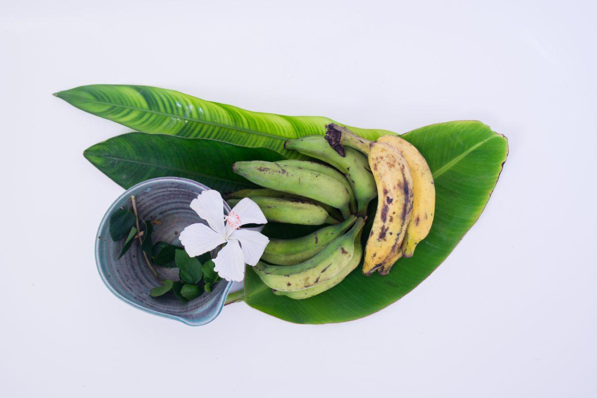Horacio Guerra Marroquín - cáscaras de plátano cascaras de platano