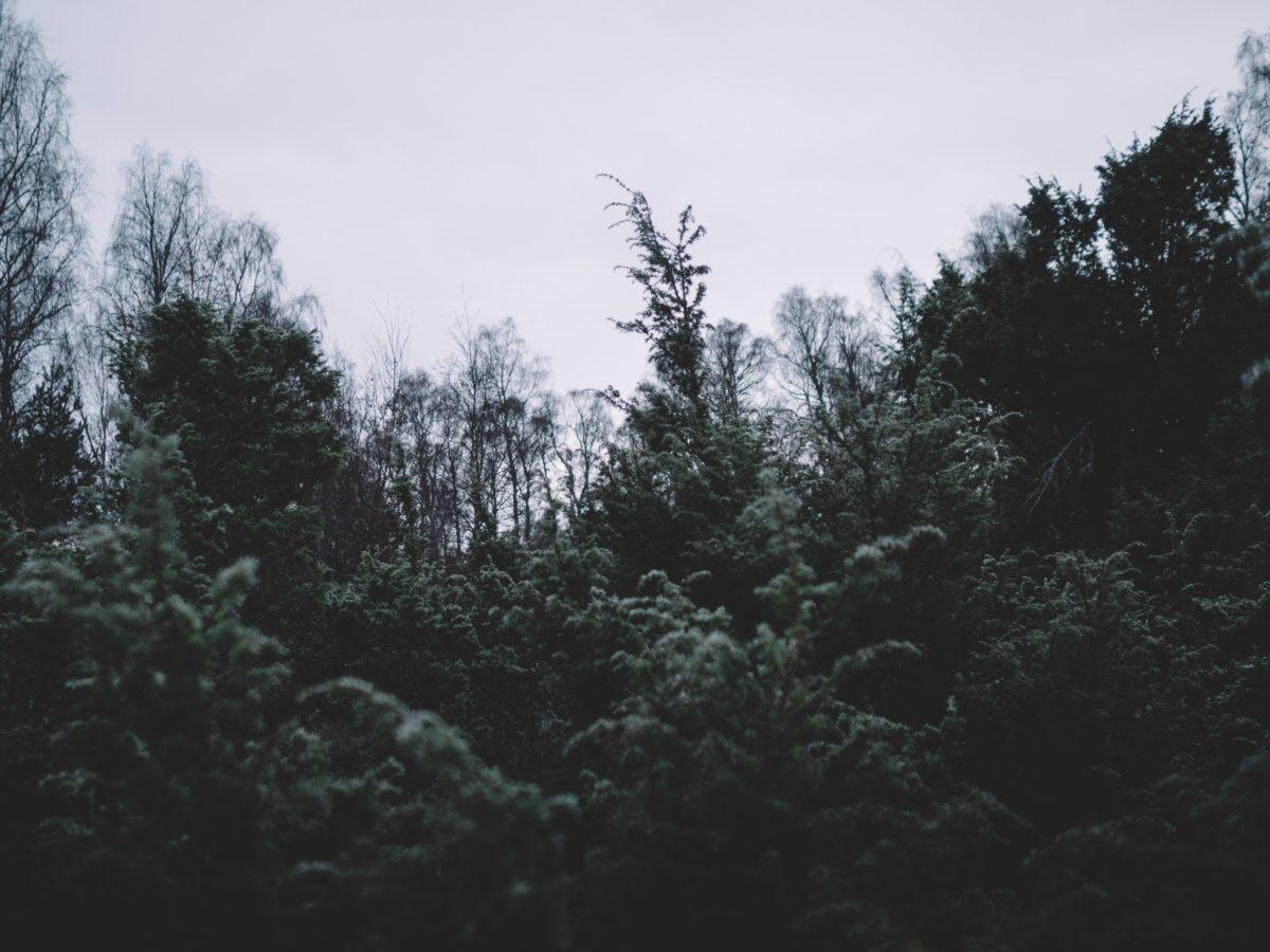 geografia plantas bosques Horacio Guerra Marroquín